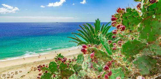 ILES CANARIES Fuerteventura