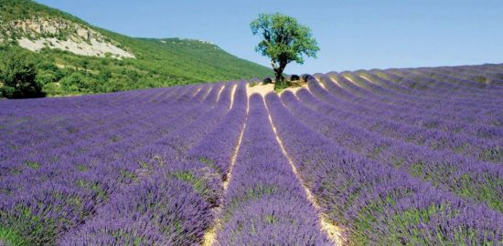 FRANCE Parc naturel des Baronnies - Drôme provençale